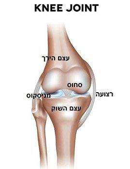 מפרק הברך