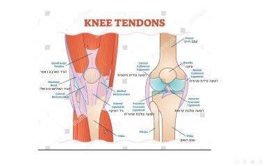 כאבים בברכיים – הסיבות לכאבים ודרכי טיפול